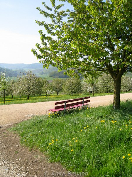 Red bench in the Fricktal