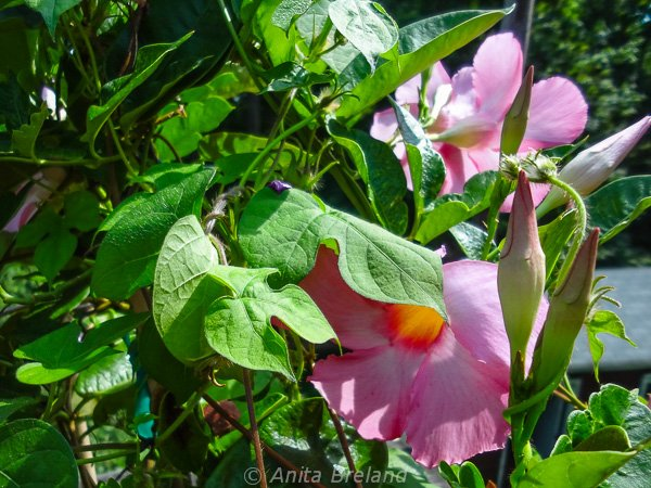 Late summer blooms in a country garden