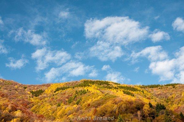 Autumn color under blue skies, Ticino, Switzerland