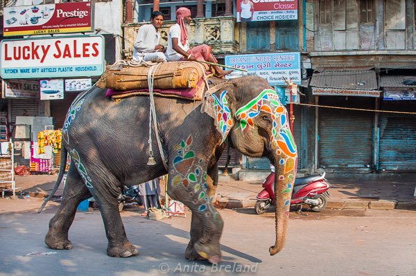 Working elephant, Ahmedabad